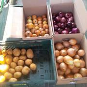 Польская агрофирма предлагает лук высокого качесва