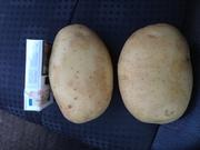 Купим картофель урожай 2016 года.