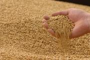 Продаем зерно фуражное.