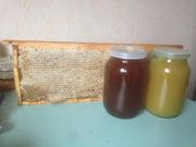 Мед натуральный,  прополис,  перга